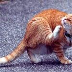 use nosk para evitar la alergia al gato