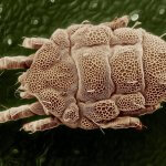 remedio al polvo, solución alergia al polvo, alergia a los ácaros