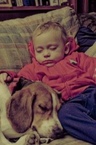 alergia al perro
