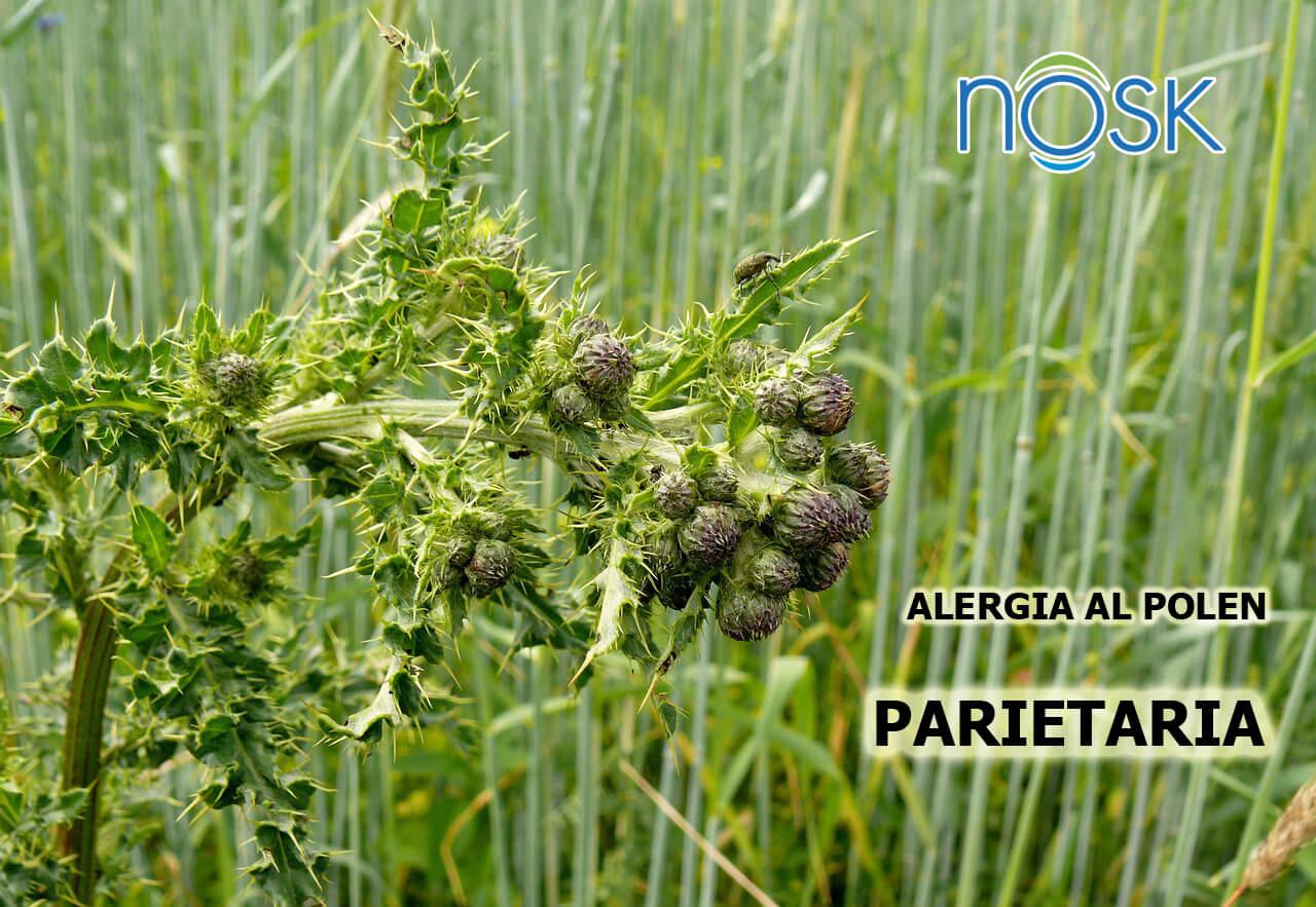 Alergia Al Polen De La Parietaria Filtrosnosk Com