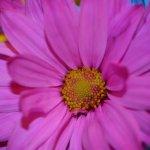 remedio polen