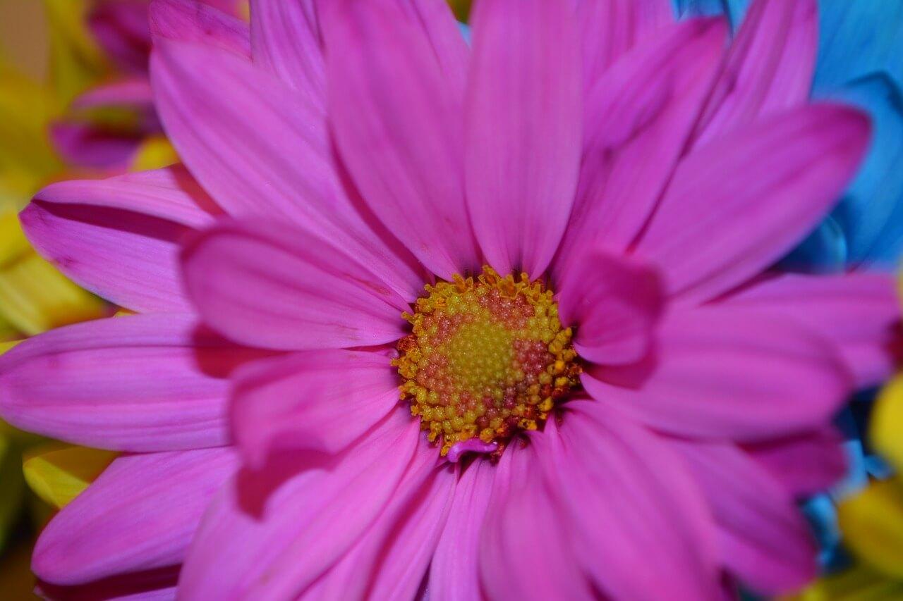 Como Curar La Alergia Al Polen De Manera Natural Filtrosnosk Com