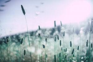El filtro nasal nosk es el remedio al polen de gramínea