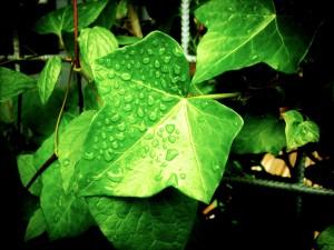lluvia,menos polen