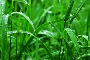 los síntomas de alergia bajan con la lluvia