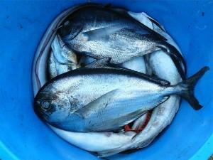 los peces y el Omega3