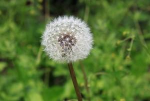 alergia en verano