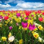 alergia en la primavera