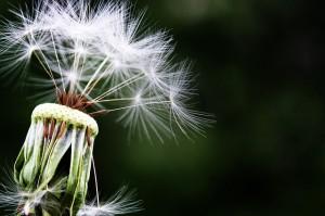 remedios naturales para la alergia