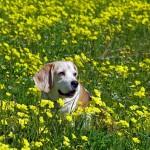 rinitis por alergia al perro