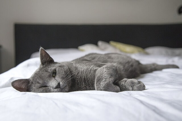 alergia y asma al gato