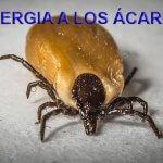 alergia ácaros