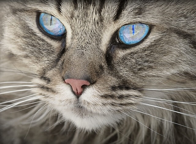 alergia al gato