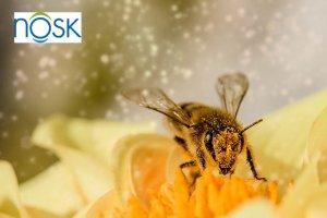 remedio alergia polen